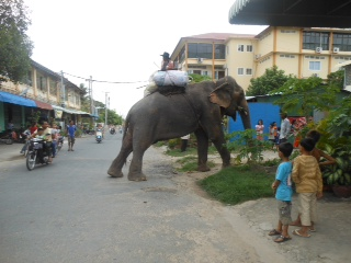 CAMBODIA BLOG DAY FOUR: 22nd May 2013 - elephants